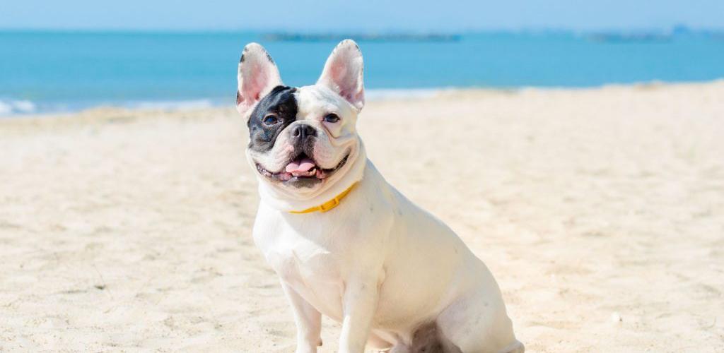 regras de condomínio na praia pets