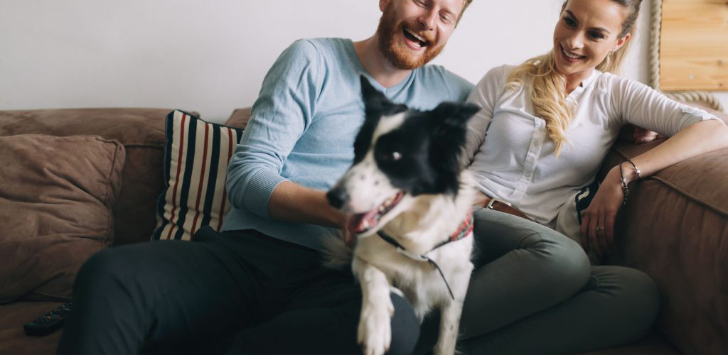 regras de ouro do condomínio pets